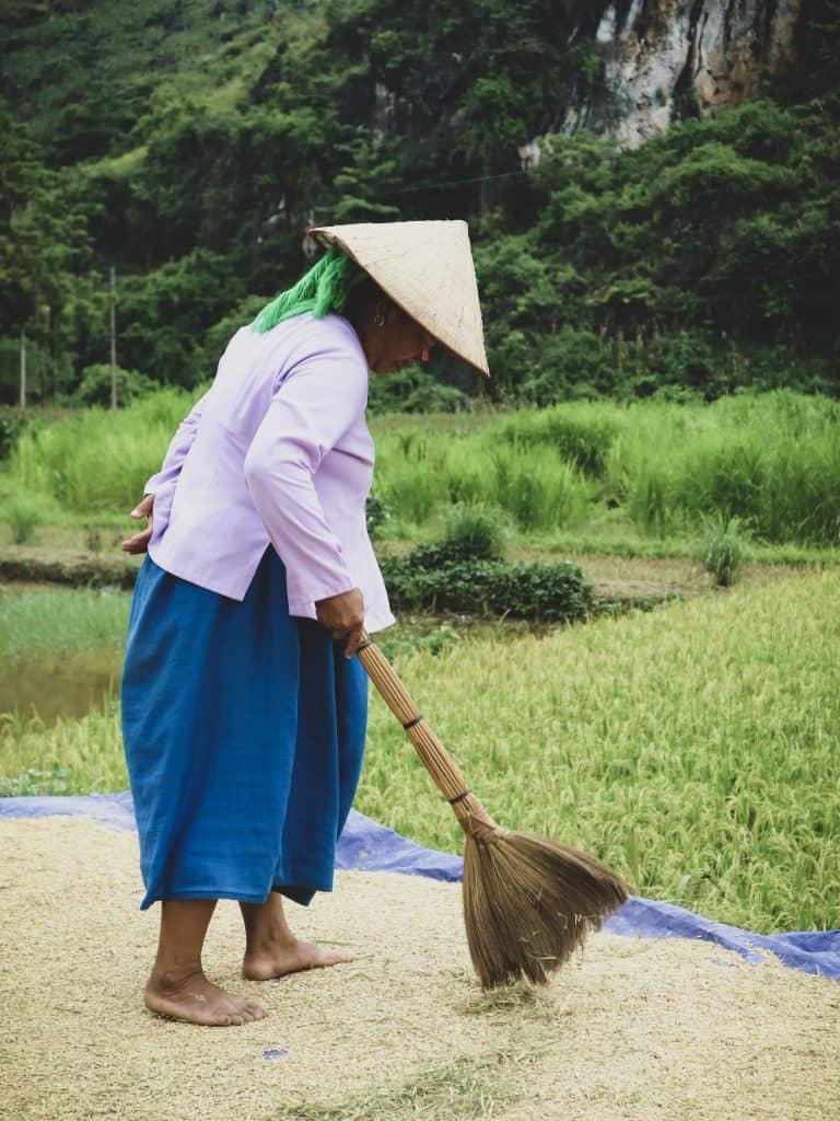 werkende vrouw  rijstveld vietnam Ha giang